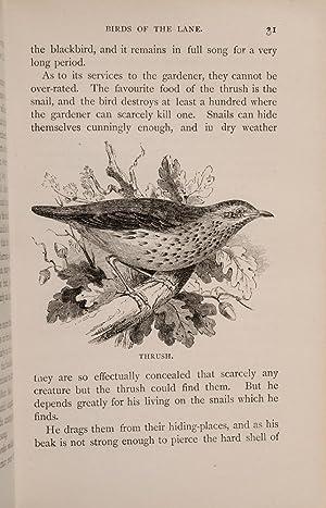 Natural History Rambles: Lane and Field: WOOD, Rev. J.G.