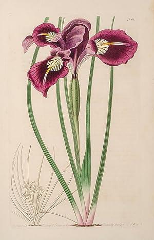Botanical Register; The: EDWARDS, Sydenham; LINDLEY, John