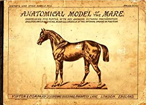 Anatomical Model of the Mare. Comprising Five Plates with Key Showing Outward Confirmation, Skele...