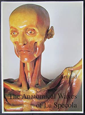 The Anatomical Waxes of La Specola
