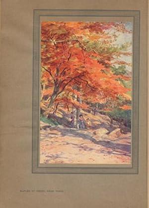Japanese Gardens: Taylour, Basil