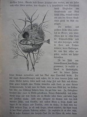 Die praktische Karpfenzucht nach des alten Oberförsters Klaehr Erfahrungen. Ein ...