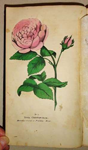 The Family Flora and Materia Medica Botanica, [Vol I only (of II)]; Containing the Botanical Anal...