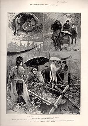"""ENGRAVING: """"With the Distressed Hop-Pickers in Kent"""". engraving from Illustrated London ..."""