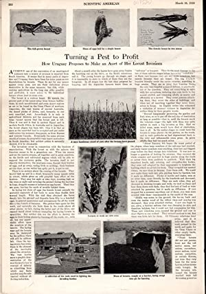 PRINT:'Turning a Pest to Profit'.article and photos from Scientific American, March 16, ...