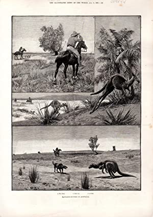 ENGRAVING: 'Kangaroo-Hunting in Australia'. engraving from The Illustrated News of the ...