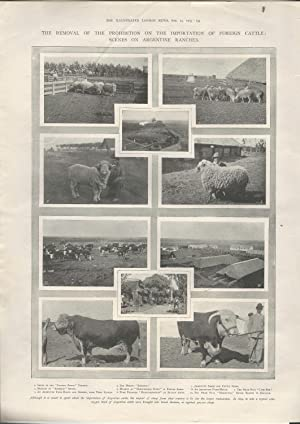 ENGRAVING: 'The Removal of the Prohibition on the Importation of Foreigh Cattle: Scenes on ...
