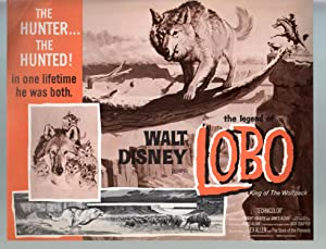 Legend Of Lobo.King Of The Wolfpack-Lot Of 8-11x14-Color-Lobby Card