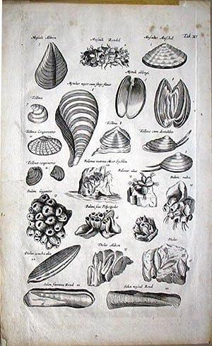 Historiae Naturalis. Engraving: SCHIPPER, J.J. /