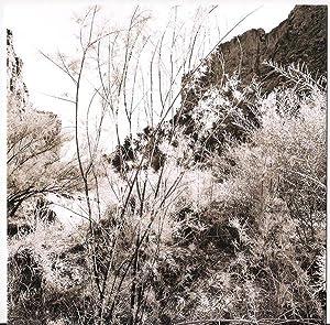 Recent Western Landscapes: Lee Friedlander (exhibition announcement): FRIEDLANDER, Lee