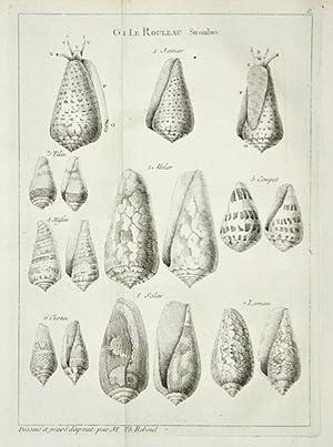 Histoire naturelle du Sénégal. Coquillages. Avec une: ADANSON, MICHEL: