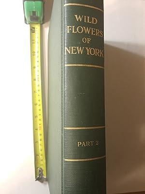 Wild Flowers of New York Part 2: House, Homer D.