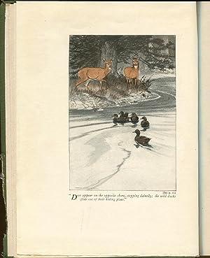 Wood-Folk Comedies: Long, William J.