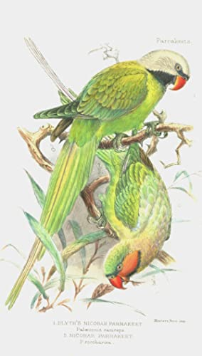 Parrakeets, A Handbook to the Imported Species: Seth-Smith, David