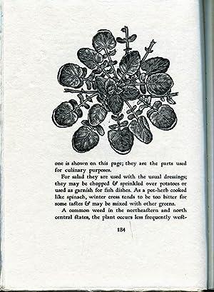 Garden Spice and Wild Pot-Herbs: Muenscher, Walter Conrad & Rice, Myron Arthur (Elfriede Abbe, ...