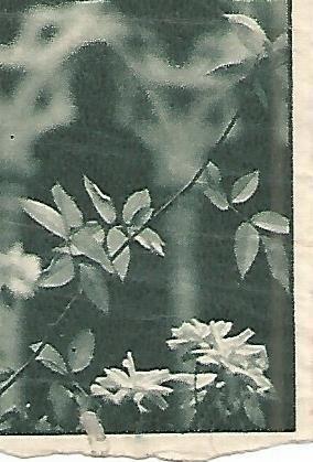 CROMO 0084 GALLINA BLANCA 2o ALBUM. Serie: Varios