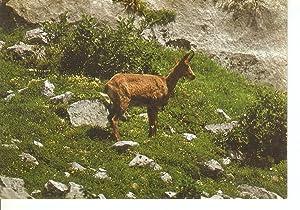 Postal 048510 : Fauna Iberica. Ruprcapra (Reveco: Varios