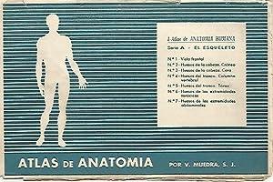 LAMINA 2172: Sobre Serie A. El esqueleto: V. Muedra