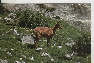 Postal: fauna Iberica: Reveco: Varios