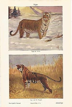 LAMINA ESPASA 8444: Tigre de Siberia y: Varios