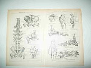 LAMINA ESPASA 25674: Ligamentos del cuerpo humano: Varios