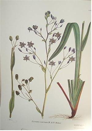 Flora de la Real Expedición Botánica del Nuevo Reino de Granada. (1783-1816) Tomo IV....