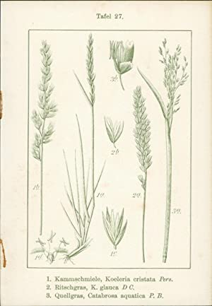 Druck Graphik - 1. Wimper-Perlgras, Melica ciliata: Königliche Hofkunstanstalt von