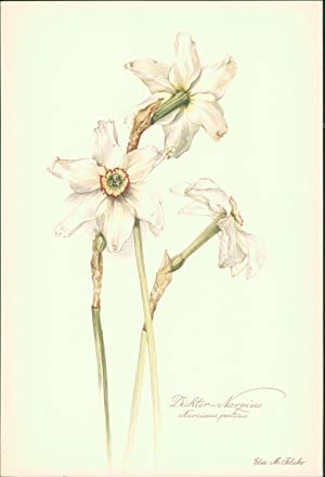 Narcissus Poeticus - AbeBooks