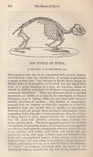 The Hyrax (Rodent) of Syria: Middleton, Rev. C.H.