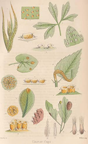 Microscopic Fungi - Parasitic on Living Plants: Cooke, M.C.