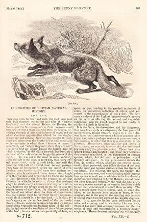 Curiosities of British Natural History: The Fox,