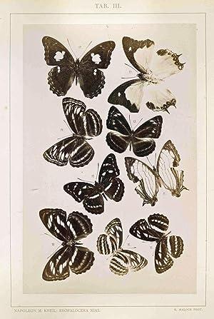 Die Rhopalocera der Insel Nias [Zur Fauna: Kheil, Napoleon M.