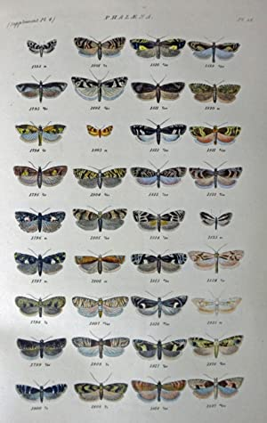 Index Entomologicus; or, A Complete Illustrated Catalogue,: Wood, W., revised