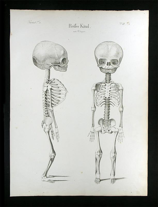 anatomie kindes - ZVAB