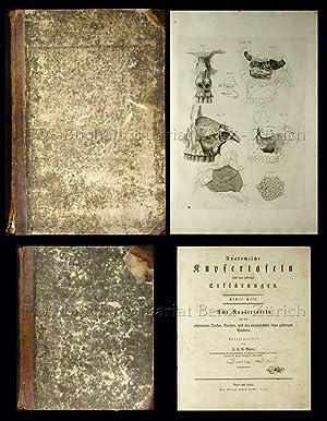 Anatomische Kupfertafeln nebst dazugehörigen Erklärungen.: Mayer, Johann Christian ...