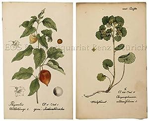 Flora der Schweiz. (Sammlung von Schweizer Pflanzen): Hegetschweiler, Johannes, u.
