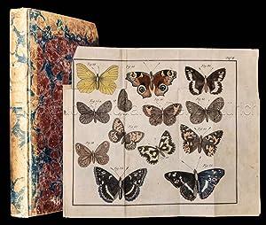 Der junge Schmetterlingssammler. Enthaltend eine ausführliche systematisch: Lentner, Johann Gottfried: