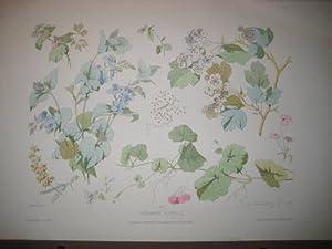 Fragmens Florelas No. 3: Becquet freres (Lith.)