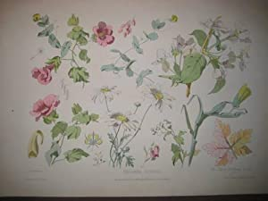 Fragmens Florelas No. 1: Becquet freres (Lith.)