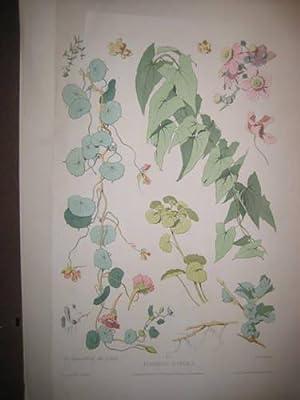 Fragmens Florelas No. 2: Becquet freres (Lith.)