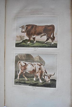 Barr's Buffon. Buffon's Natural History, Containing a Theory of the Earth, A General ...