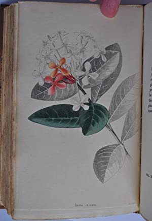 The Botanical Cabinet, consisting of coloured delineations of Plants from all Countries, with a s...