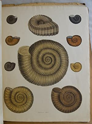 Shop Conchology Collections Art Collectibles