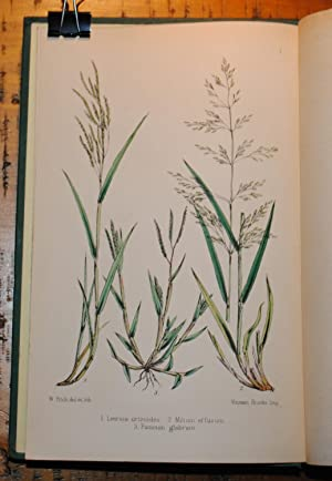 British Grasses: an introduction to the study of the Graminae of Great Britain and Ireland