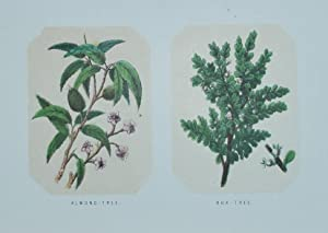 The Plants of the Bible. Trees and Shrubs