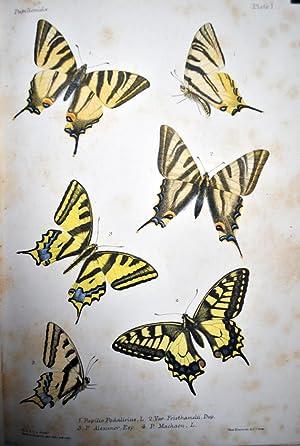 The Butterflies of Europe described and figured. Rhopalocera Europa descripta et delineata Vol II: ...