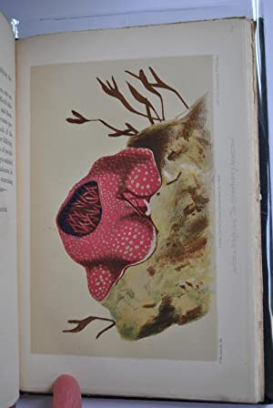 Robert Hamilton The Natural History Of British Fishes