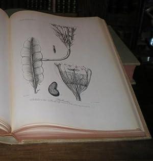 GENERA ET SPECIES PLANTARUM ARGENTINARUM.: DESCOLE, Horatius R