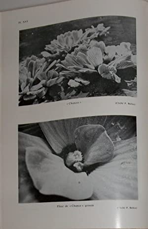 Quelques aspects de la nature aux Antilles: Pére R. PINCHON