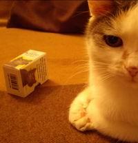 Deine Katze (DER BOSS).: Exley, Helen: